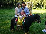 Карета Лошадь Пони Верблюд Лама Сани Фаэтон в Алматы, фото 3