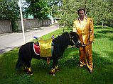 Карета Лошадь Пони Верблюд Лама Сани Фаэтон в Алматы, фото 4