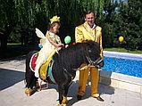 Карета Лошадь Пони Верблюд Лама Сани Фаэтон в Алматы, фото 5