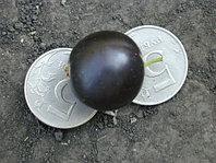 Смородина черная ядреная