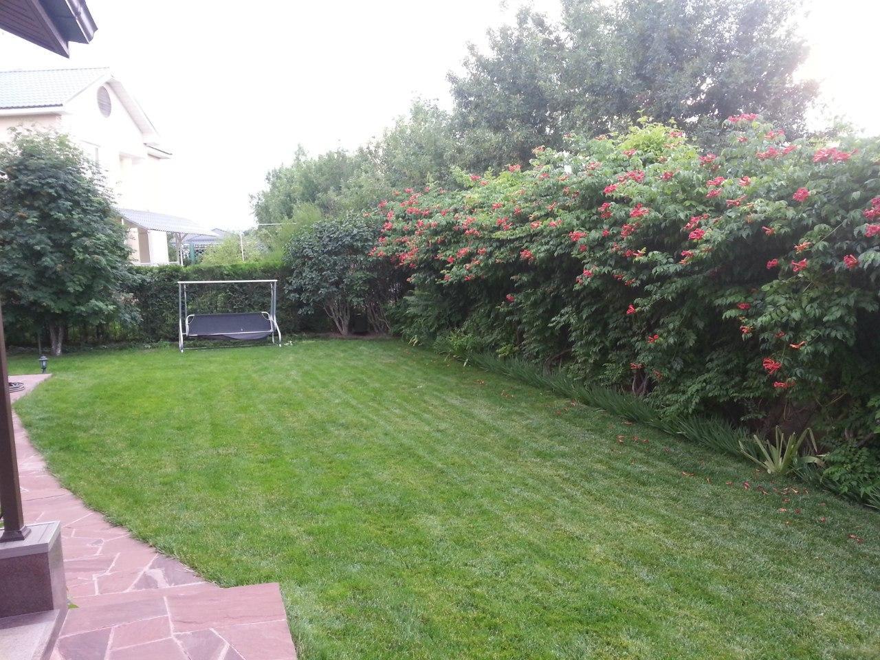 Посев газона - фото 1