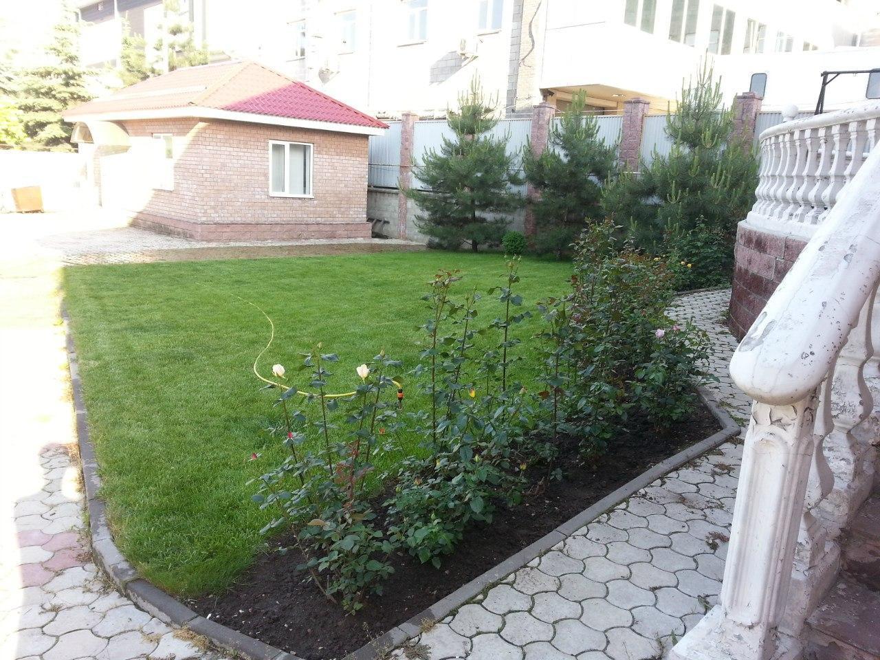 Посев газона - фото 2