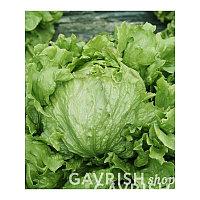 Семена салата Патриций 20 гр