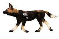 Mojo Африканская собака