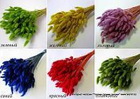 Сухоцвет для топиариев и букетов в ассортименте