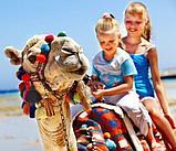 Карета Лошадь Пони Верблюд Лама Сани Фаэтон в Алматы, фото 6