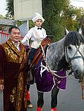 Карета Лошадь Пони Верблюд Лама Сани Фаэтон в Алматы, фото 8