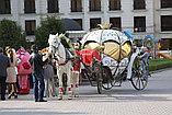 Карета Лошадь Пони Верблюд Лама Сани Фаэтон в Алматы, фото 10