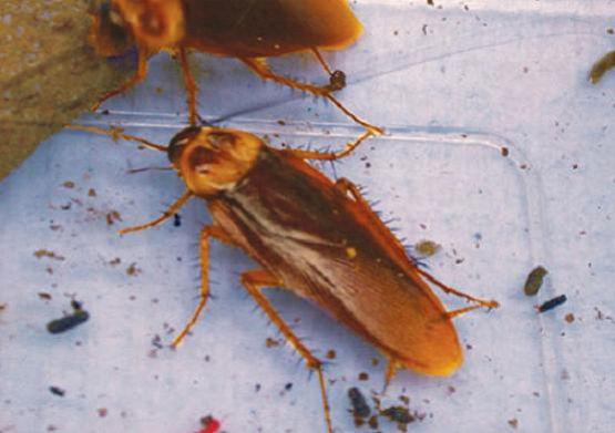избавится от тараканов