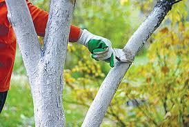 Материалы для защиты кустов и деревьев