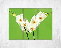 Модульная картина - Белый цветок триптих