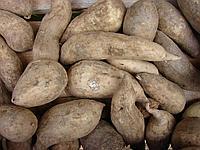 Батат(сладкий картофель), фото 1