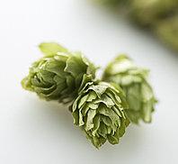 Хмель гранулированный ароматный сорт Centennial (10.4%, за 100гр.)