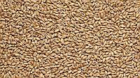 """Солод пшеничный пивоваренный """"Пшеничный 9.7"""""""