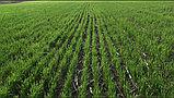 Сеялка прямого посева Берегиня АП-652, фото 5
