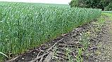 Сеялка прямого посева Берегиня АП-652, фото 6