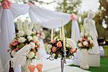 Выездная регистрация брака в Алматы, фото 6