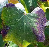 Листовая диагностика растений