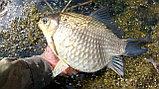 Активатор клева Fish Hungry (фиш хангри), фото 3
