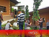 Посадка деревьев. Озеленение Алматы