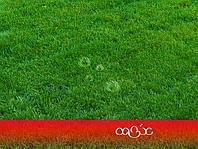 Посев газона. Озеленение. Благоустройство территорий