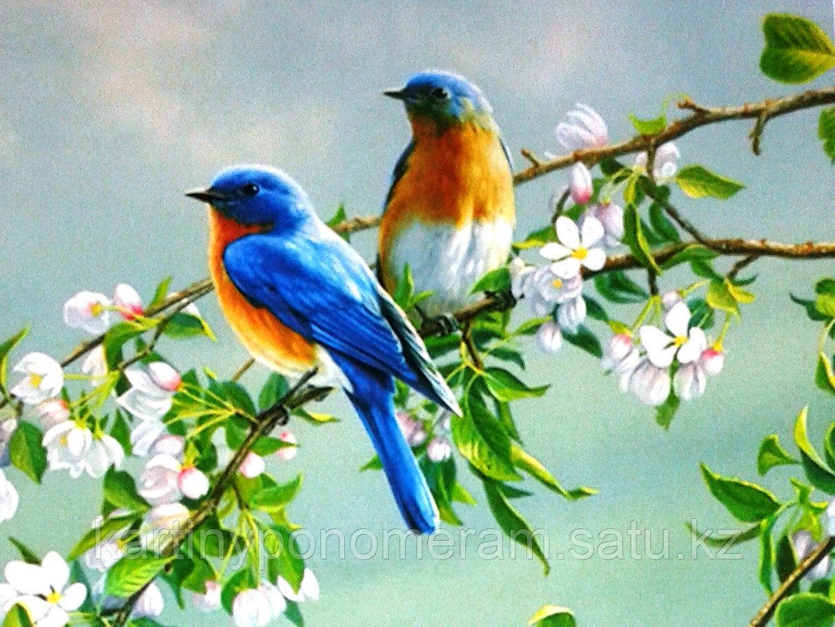 """Картина по номерам """"Птички на цветущей ветке"""""""