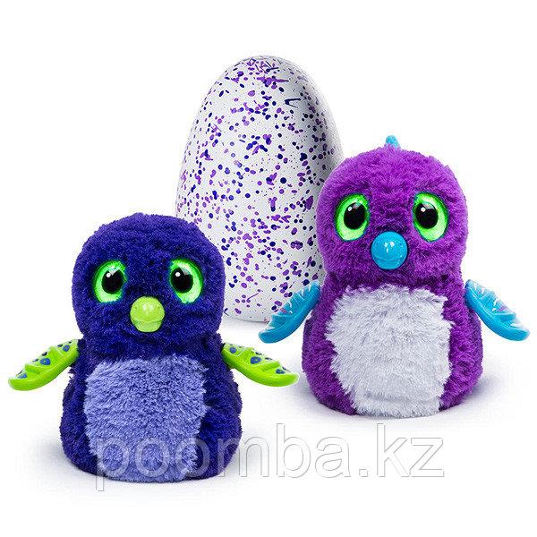 Интерактивная игрушка Hatchimals - Дракоша, синий / фиолетовый