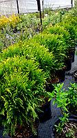 Озеленение загородных участков, частных и офисных прилегающих территорий