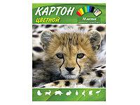 """Цветной картон """"Animal World"""" 10 листов"""