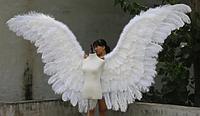 Крылья Лебедя