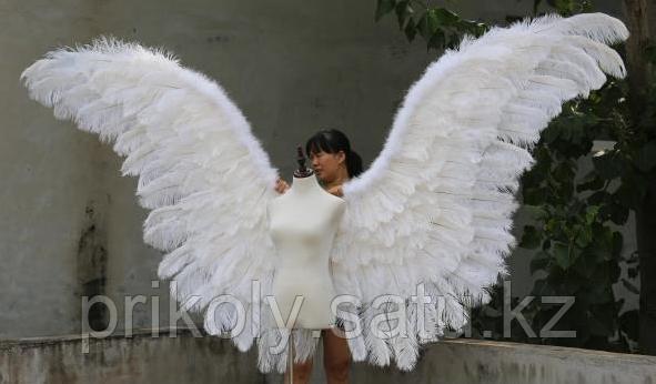 Крылья Лебедя - фото 1