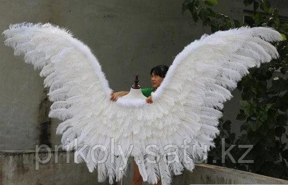 Крылья Лебедя - фото 2