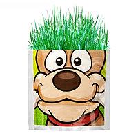 """Растущая трава """"Собака"""", трава, фото 1"""