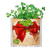 """Растущая трава """"Клевер"""", в подарочном пакете, фото 1"""
