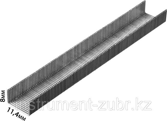 Скобы тип 80, 8 мм, супертвердые, KRAFTOOL 31690-08, 3000 шт, фото 2