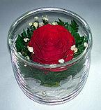 Вечный цветок в Алматы SSR, фото 2