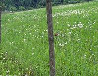 """Сетка шарнирная из оцинкованной проволоки (ограждение для скота;""""Чабанка"""") h=1.43 м, L=50 м"""