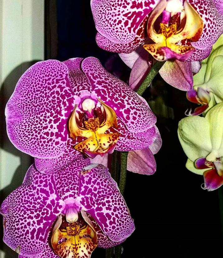 Орхидея Без имени 3