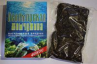 Морские водоросли - Фукус и Ламинария