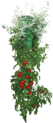 Плантатор для помидор  Топси (Topsy turvy), Алматы, фото 2