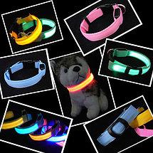 Светодиодный ошейник для собак USB, Алматы, фото 2