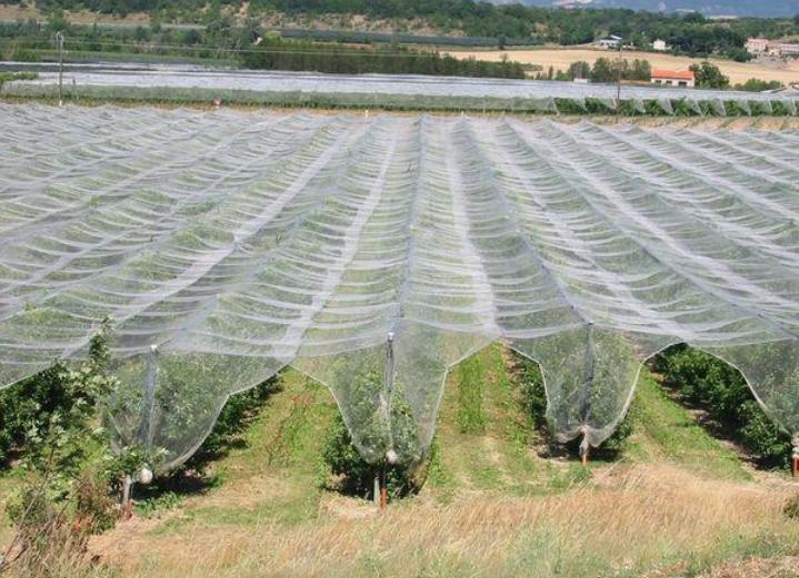 Сетка для защиты от града садов и виноградников