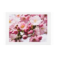 Набор постеров Эделвик, весенний цветок II