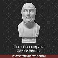 Бюст Гиппократа (гипс,12*10*20 см)