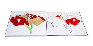 Строение цветка (пазлы) и его контур (ламинированный)