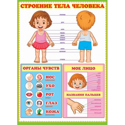 Человек -1 (Тело человека,внутренние органы,лицо,пальцы) Карточки- расширение словаря.