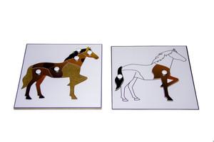Строение лошади (пазлы) и её контур (ламинированный)