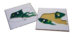 Строение лягушки (пазлы) и её контур (ламинированный)