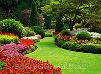 Укладка газона, фото 1