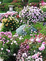 Посадка цветников, фото 1